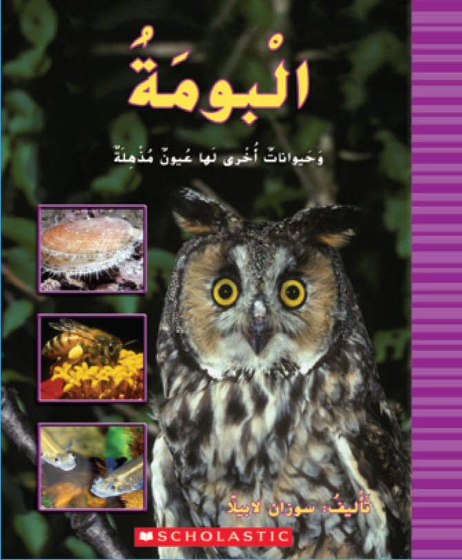 Owls and Other Animals with Amazing Eyes